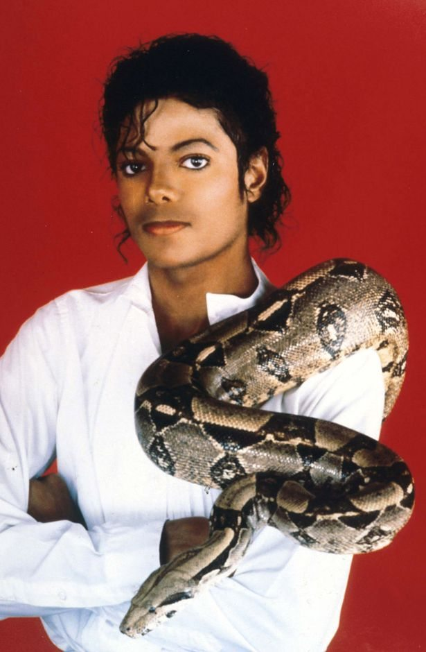 Mj S Snakes Find New Home In Fruita Michael Jackson